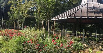 Community Parks Initiative Gardener Training Program