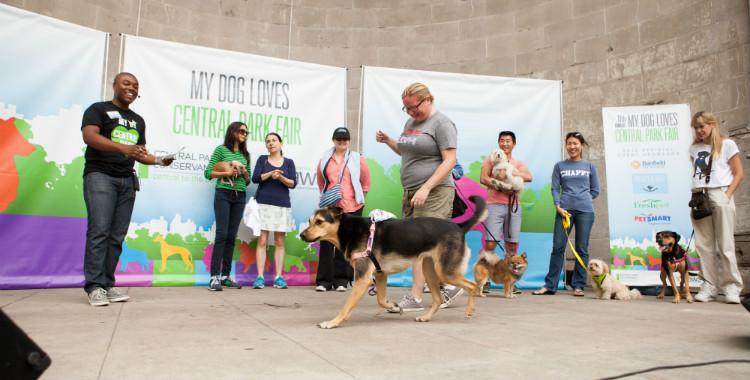 Dog Fair 2013