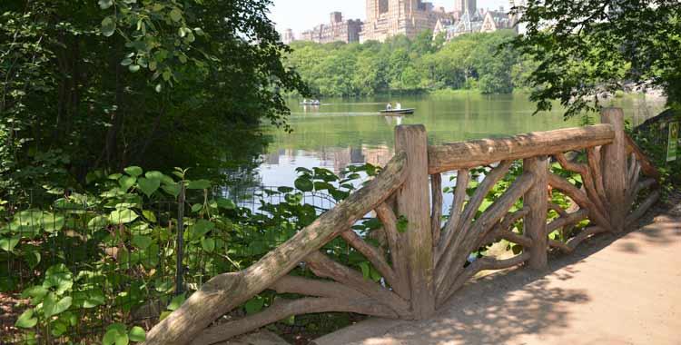 Rustic Bridge in the Ramble