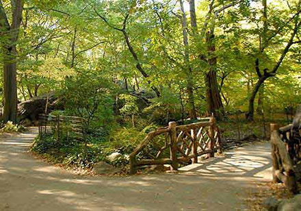 Azalea pond rustic-bridge