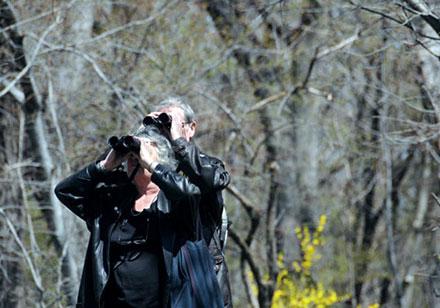 Birding in Central Park