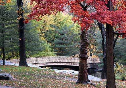 Pinebank Arch