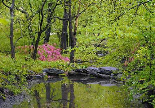 azalea pond