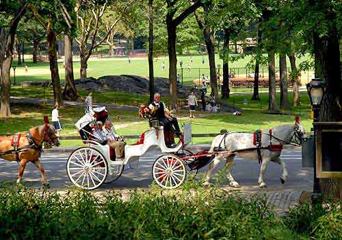 horse drawn carriage rental the official website of central park nyc. Black Bedroom Furniture Sets. Home Design Ideas