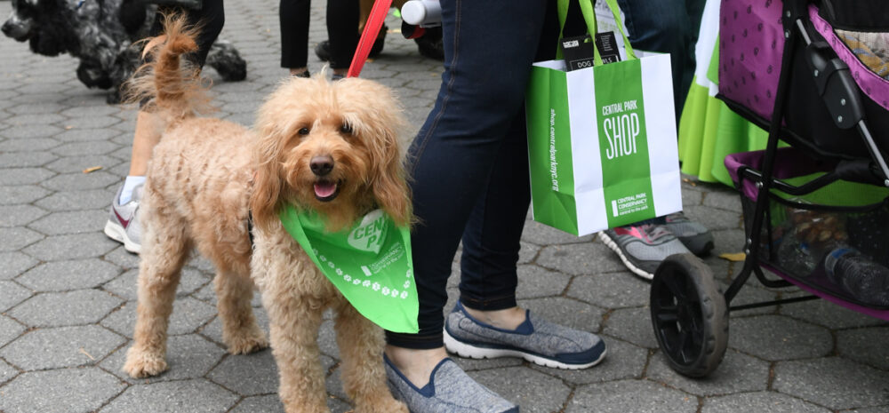 A canine participant sporting a green bandana poses with its human