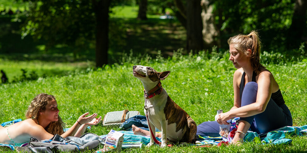 Two women and a dog enjoy a summer picnic in the park