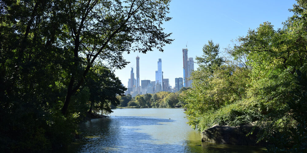 A view across the Lake, framed by trees, with the midtown skyline in the distance