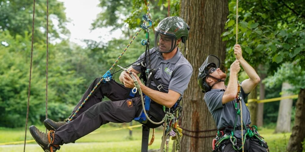 One arborist hangs in his harness while the other tests his rope.