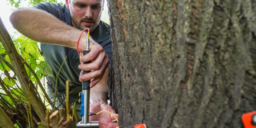 Blog rect 2x Arborist 3