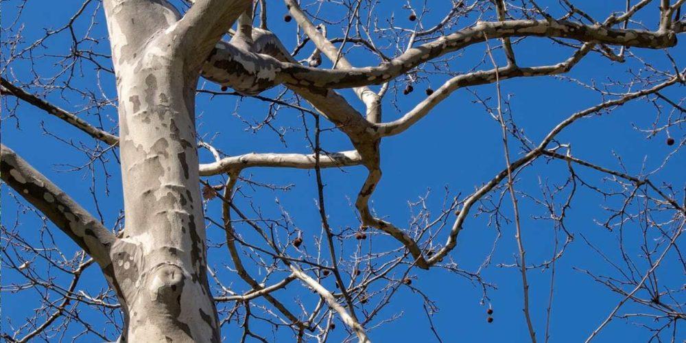 Blog rect 2x Arborist 5