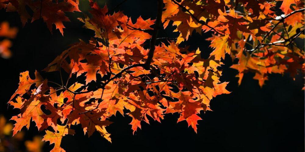 Blog wide 2x Make CP Thanksgiving 4