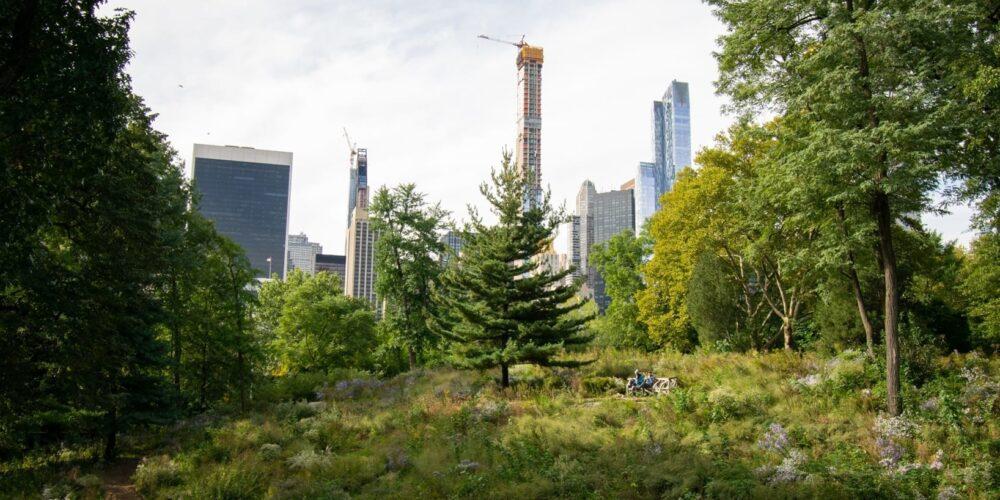 Blog wide 2x Native Meadow Progress 2
