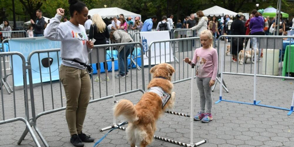 Press Release rect 2x Dog Fair 4