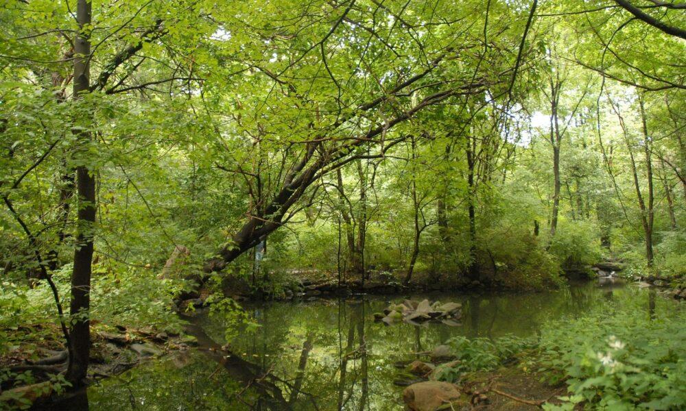 Landscapes Ramble Summer DSC 0013