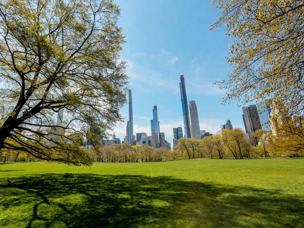 The towers of midtown are the backdrop to a wide-angle shot of the Sheep Meadow