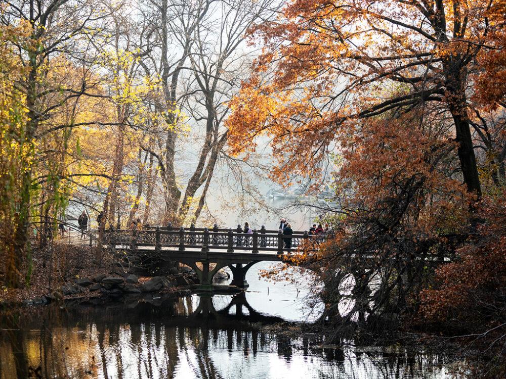 Oak Bridge, photographed in Autumn