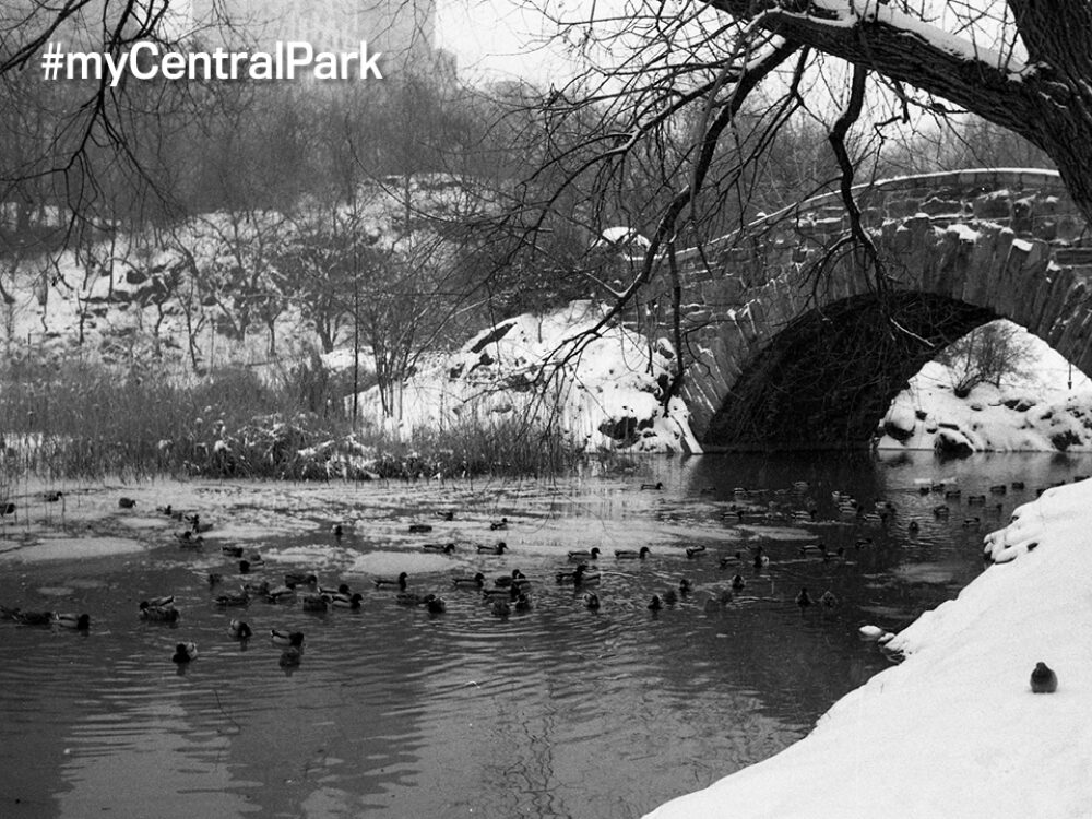 Black-and-white archival image of Gapstow Bridge in snow.