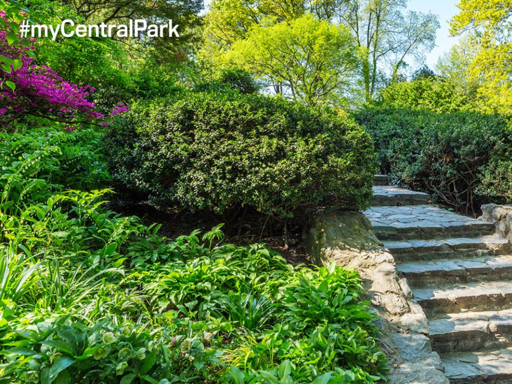 Stone steps lead up through a path of green shrubbery