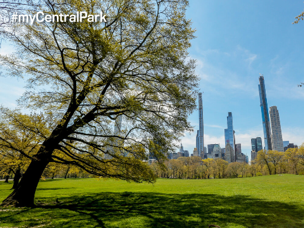 The towering skyline of midtown Manhattan rising behind the expanse of Central Park
