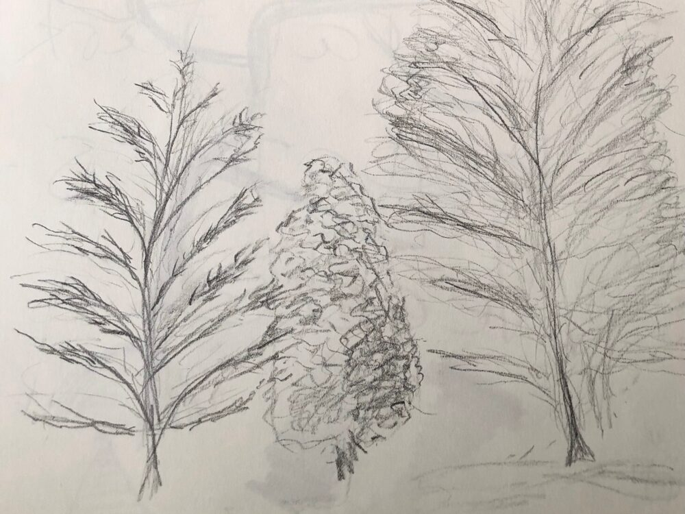 "Elizabeth Romanczyk: ""Cedar Hill"" (Pencil)"