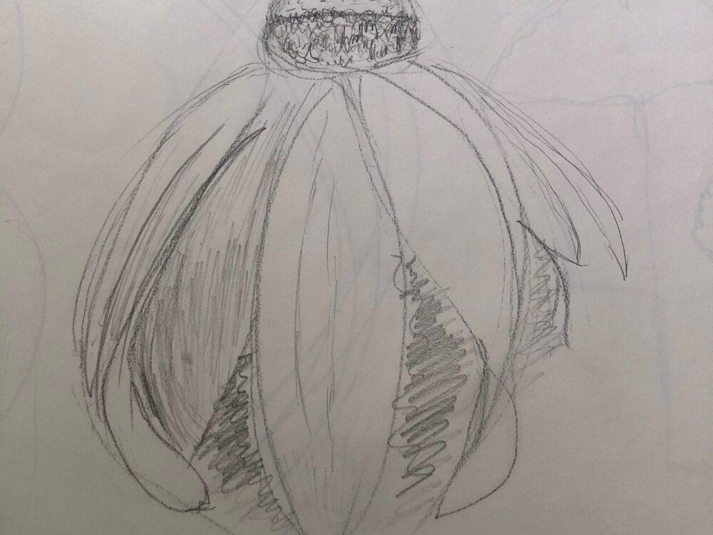 """Elizabeth Romanczyk: """"Shakespeare Garden"""" (Pencil)"""