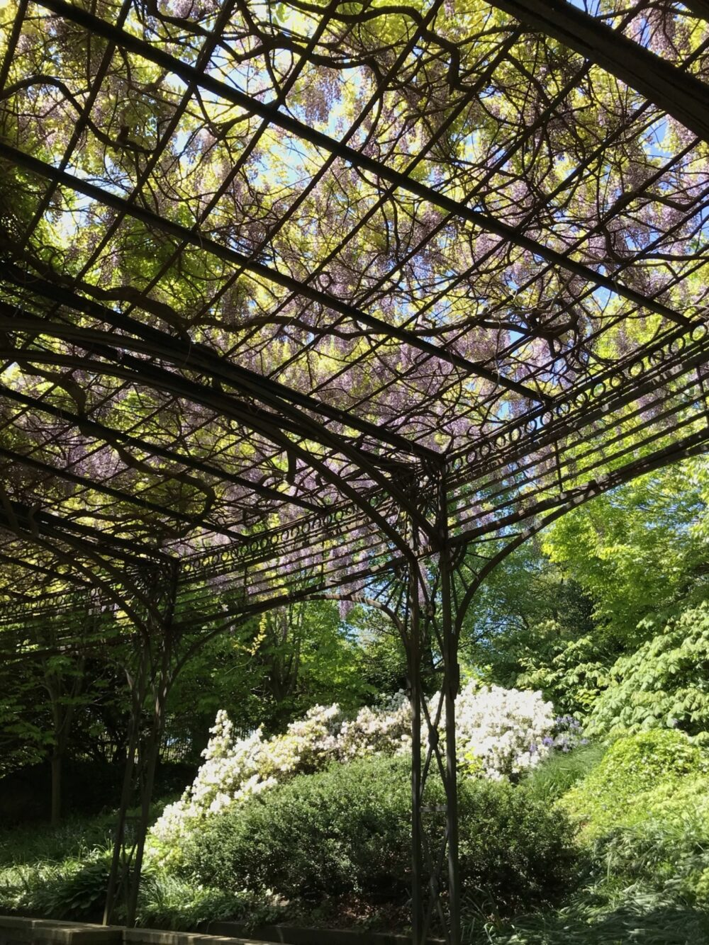 A view looking up through the latticework of the pergola.