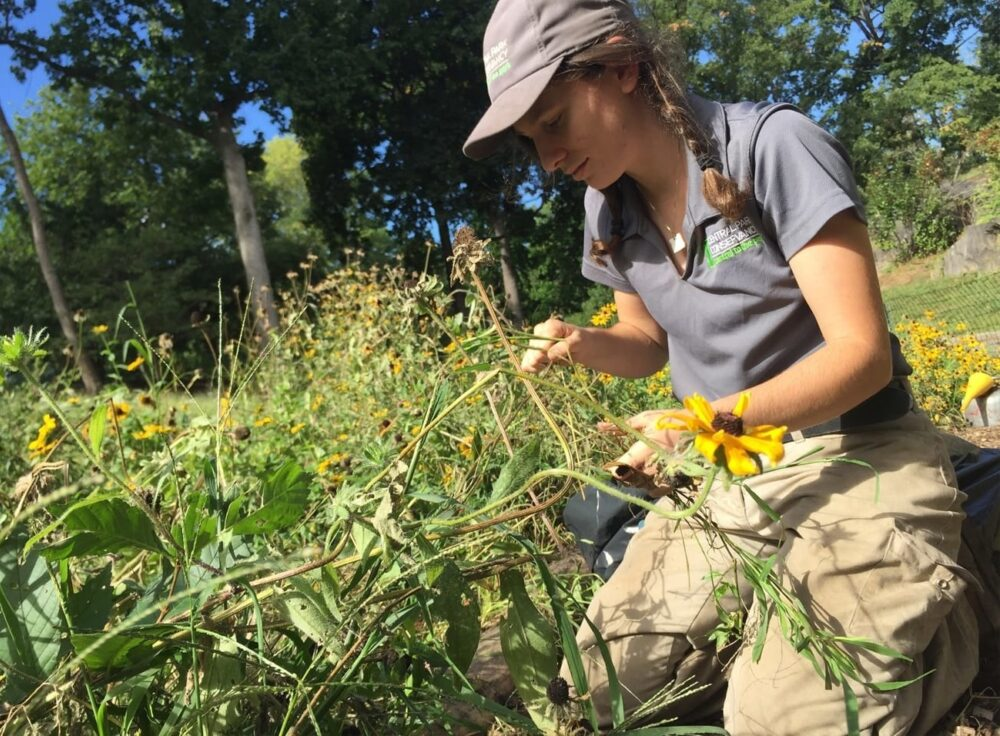 Blog rect 2x native meadow progress 1
