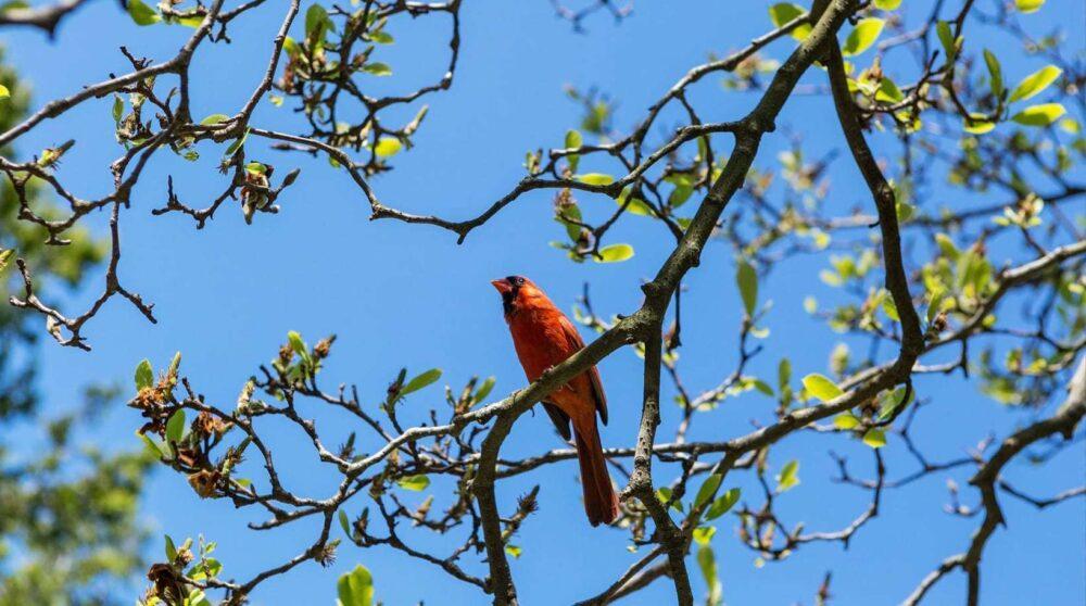 Blog wide 2x Beginners Birdwatching