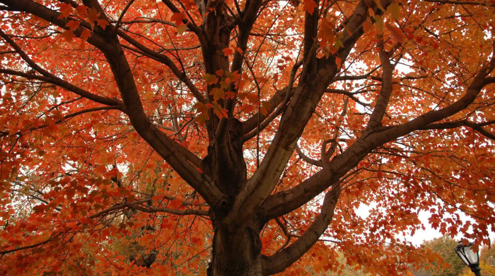 Blog wide 2x What Are Colorful Trees 1