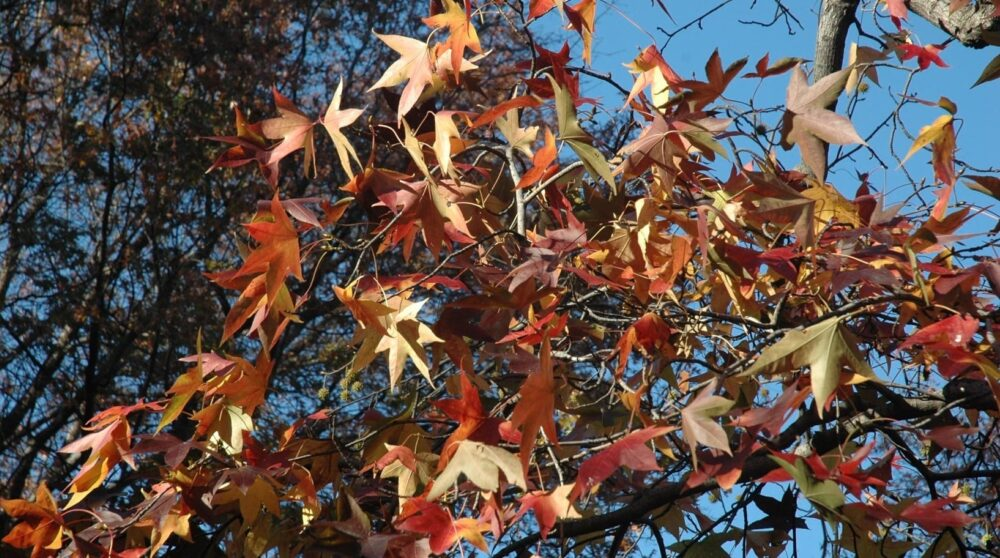 Blog wide 2x What Are Colorful Trees 4
