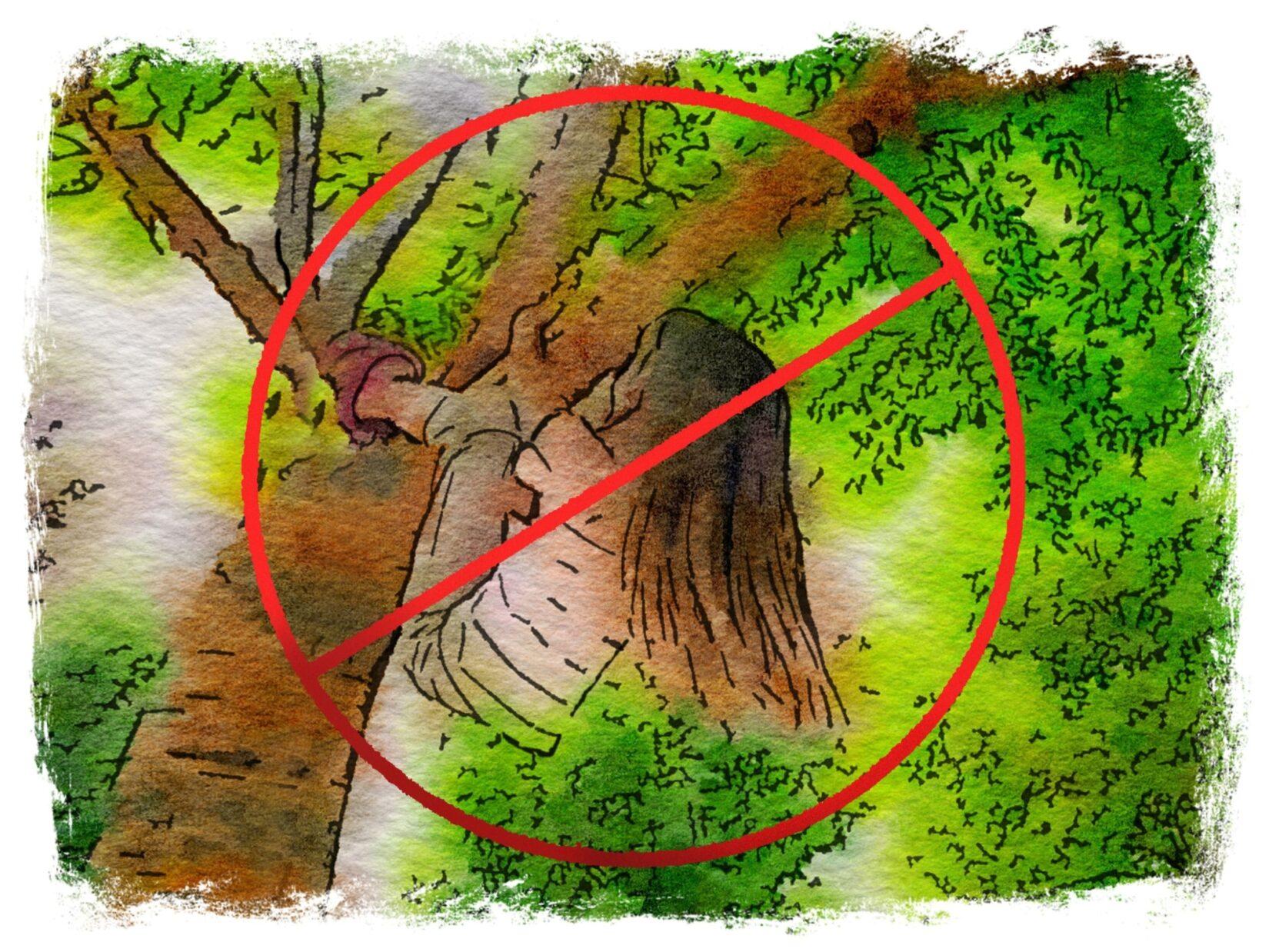 1c Never Climb Branches 2500x1875px