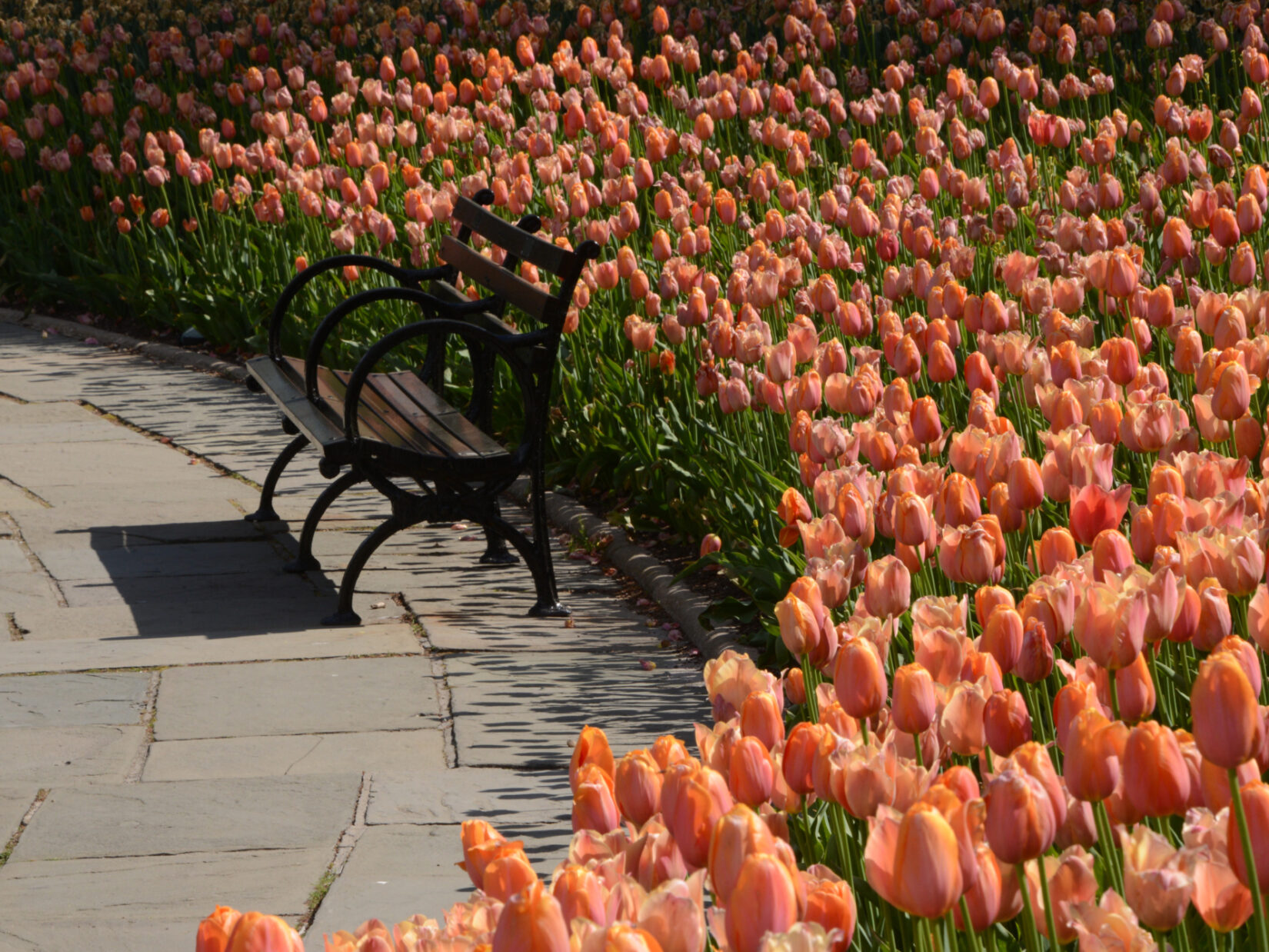 Tulips crowd behind an empty park bench in Conservatory Garden