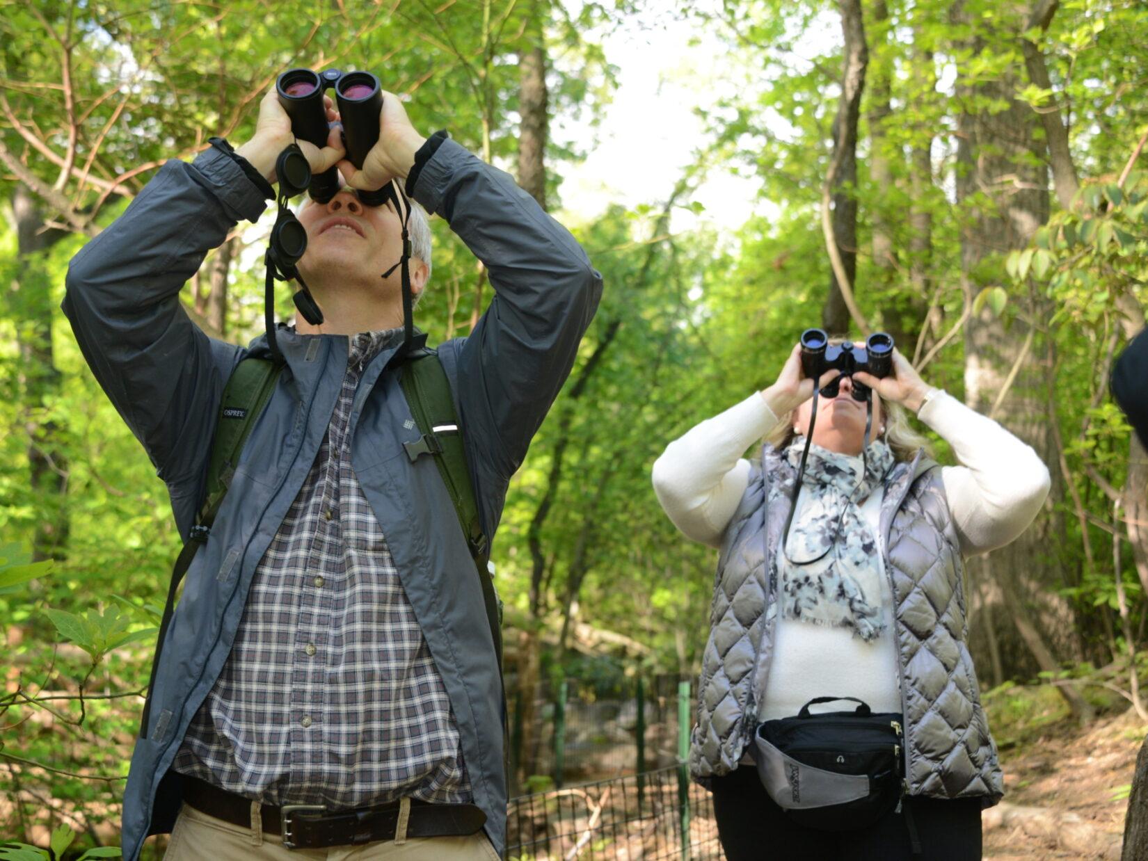 Birders behind binoculars focus on the canopy of the Hallett Nature Sanctuary