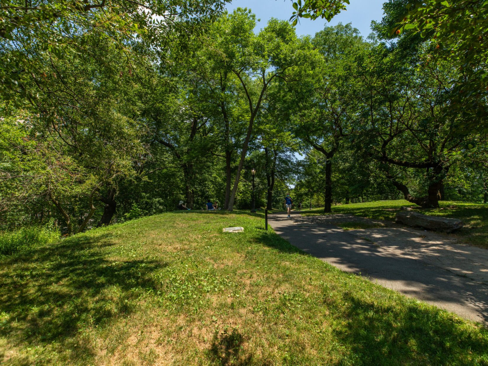 A parkgoer can be seen strolling a path lined with trees