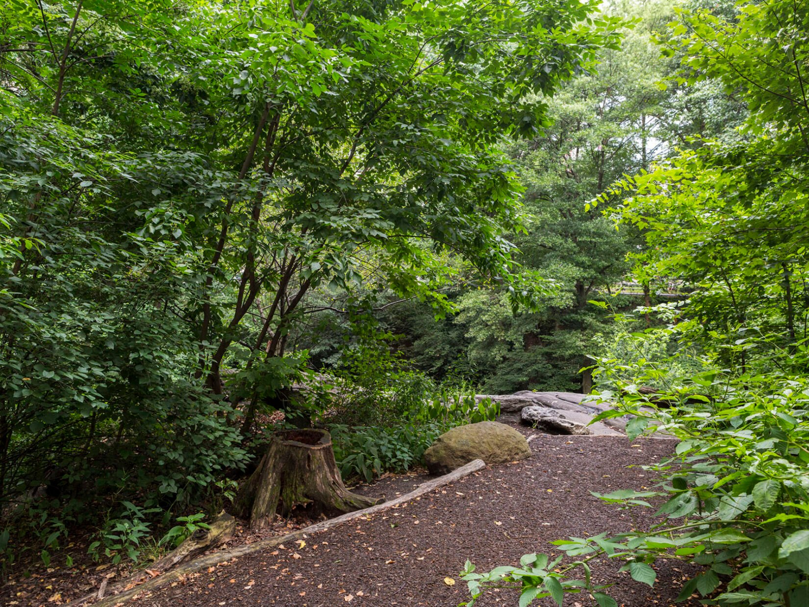 A revitalized footpath is lined by trees and underbrush