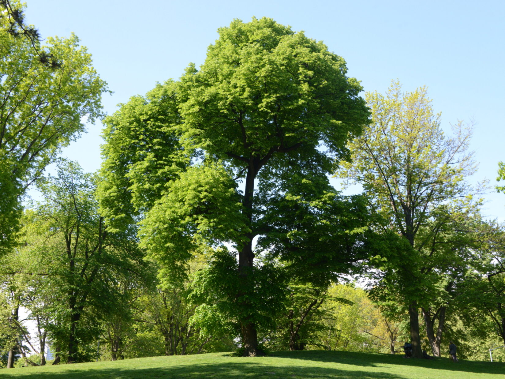 Trees surrounding Conservatory Water