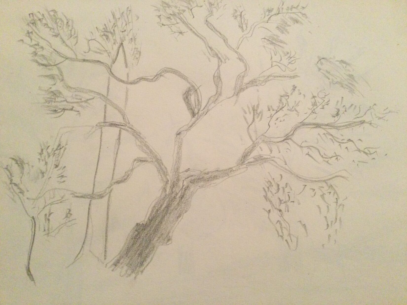 Pencil drawing of a mulberry with Cleopatra's Needle in the background