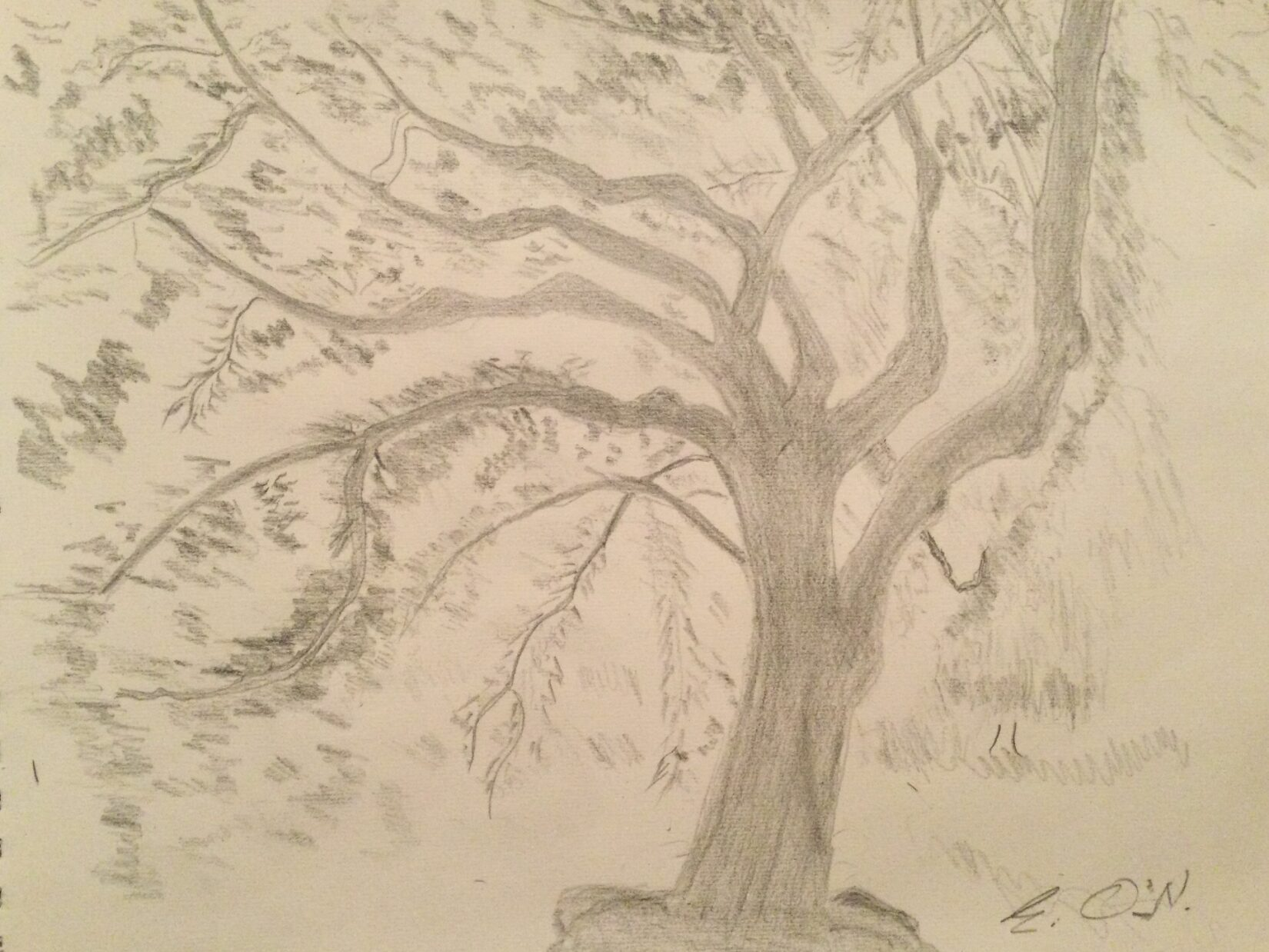 Pencil drawing of a cherry tree