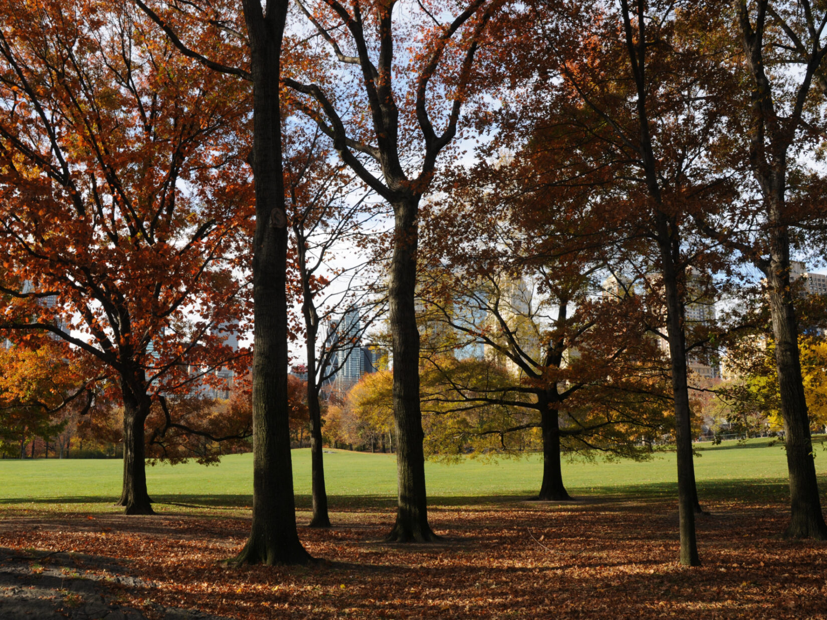 Looking through a stand of trees in autumn to the green of the grass in the distance