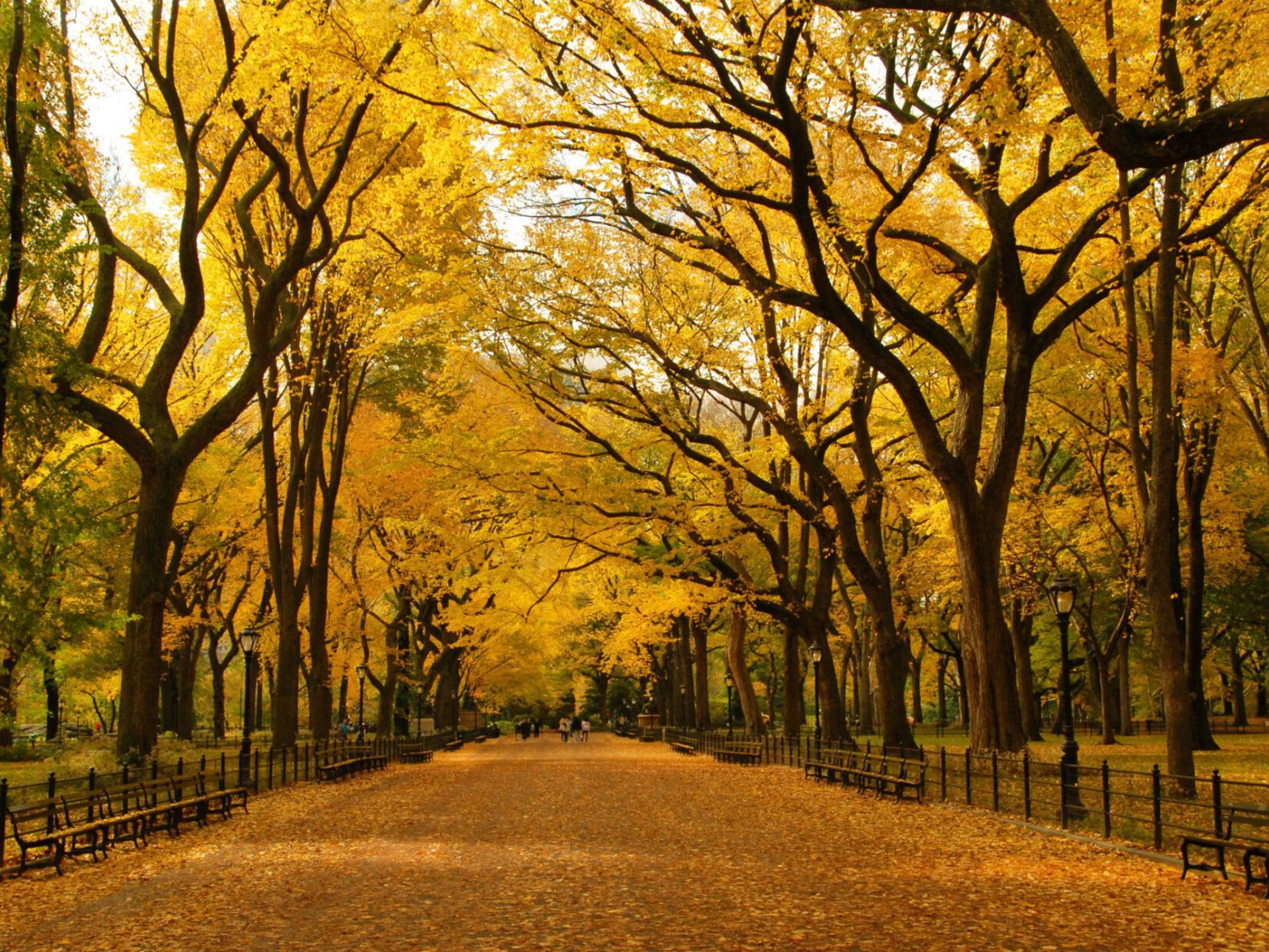 Fall the Mall Central Park credit the Central Park Conservancy