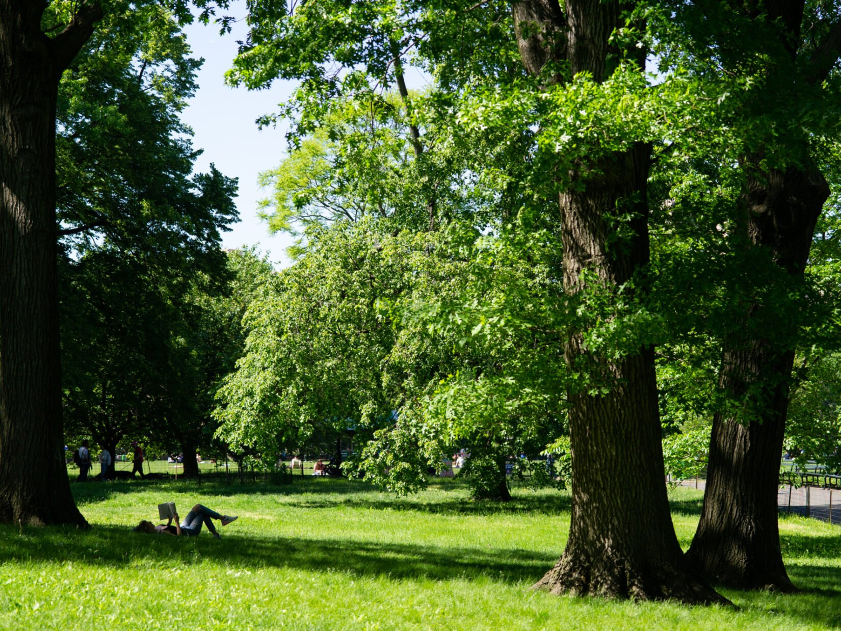 A reader finds a shady spot for a good book beneath the trees of the Great Lawn