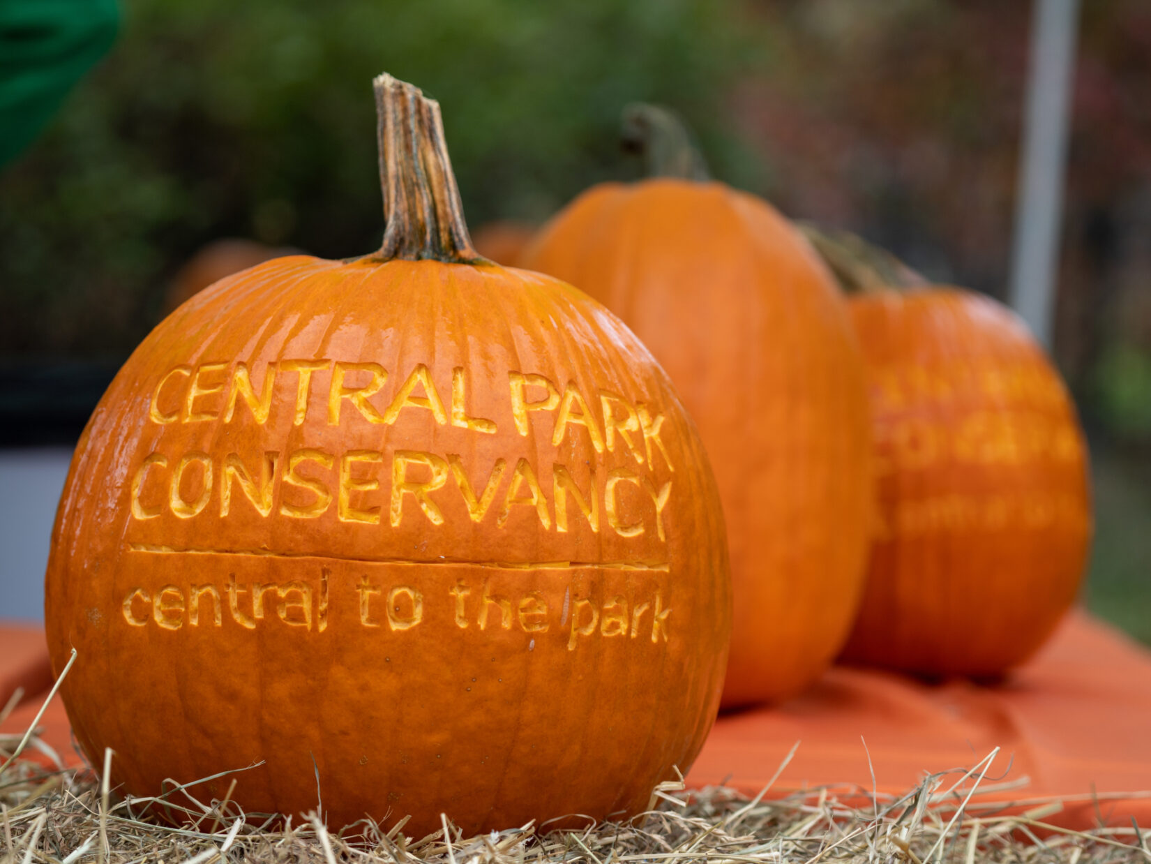 Halloween Pumpkin Flotilla 20191030 05983