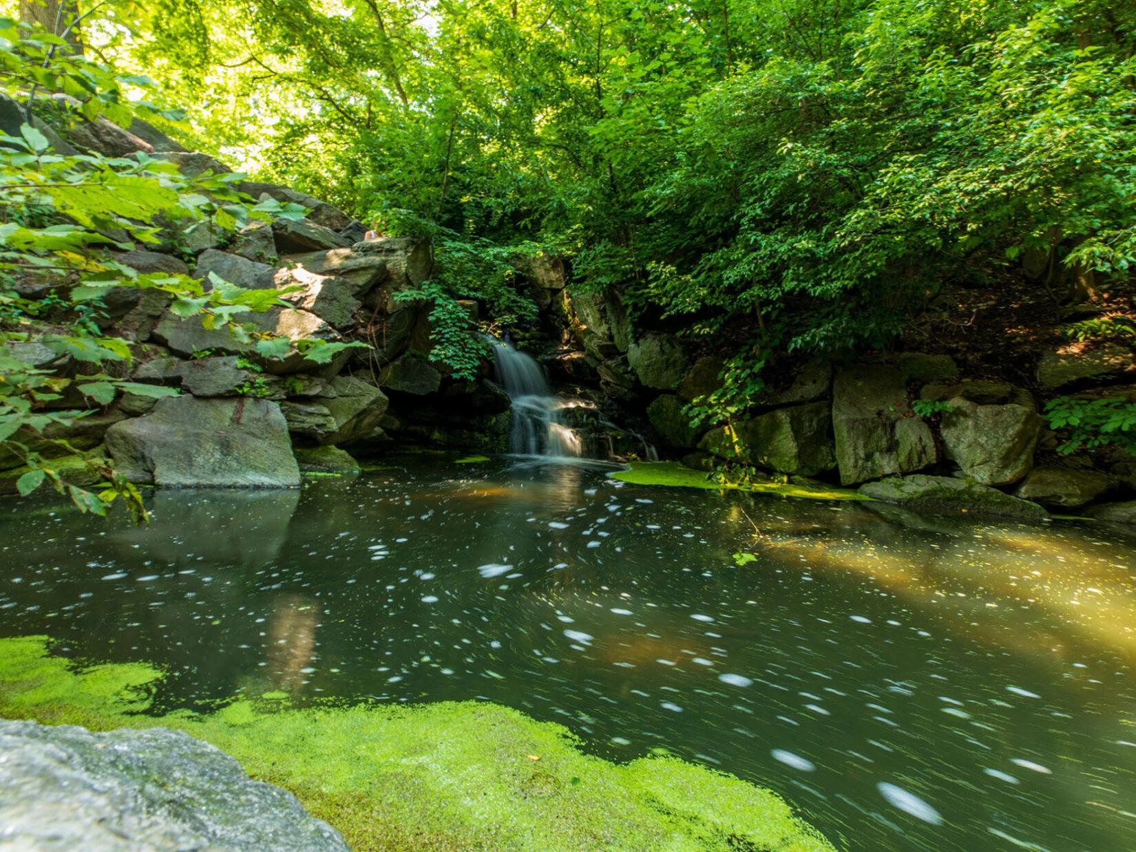A small waterfall in the Ramble