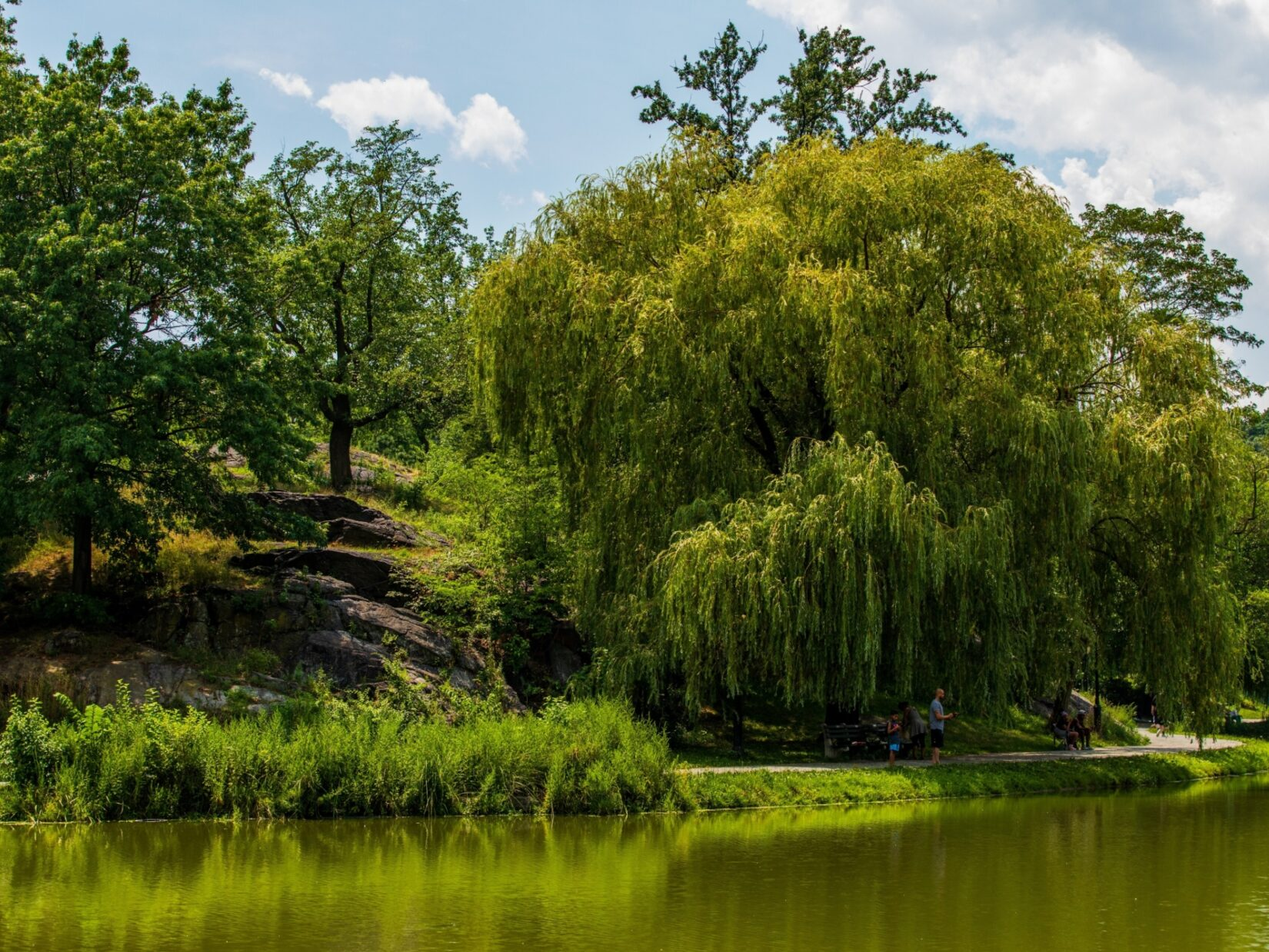 Trees reflected in the Harlem Meer
