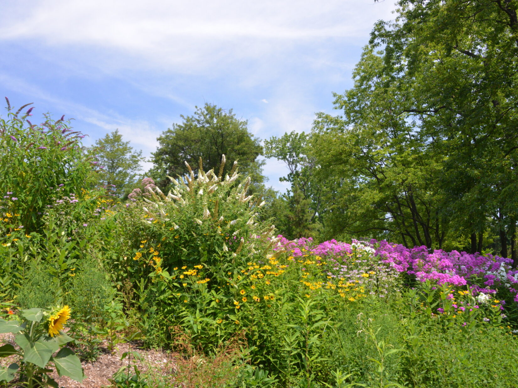 A view of the Butterfly Gardens with colorful blooms under a blue sky.