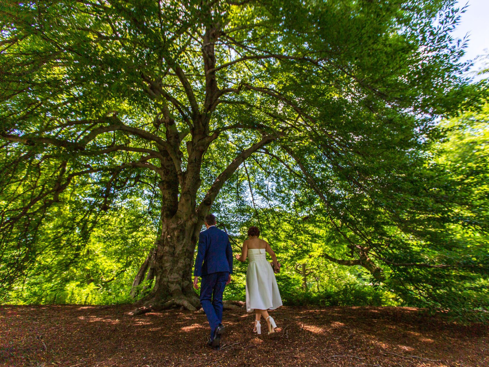 A couple, formally dressed, walk up a hill beneath the spreading boughs of a large, shadowed tree