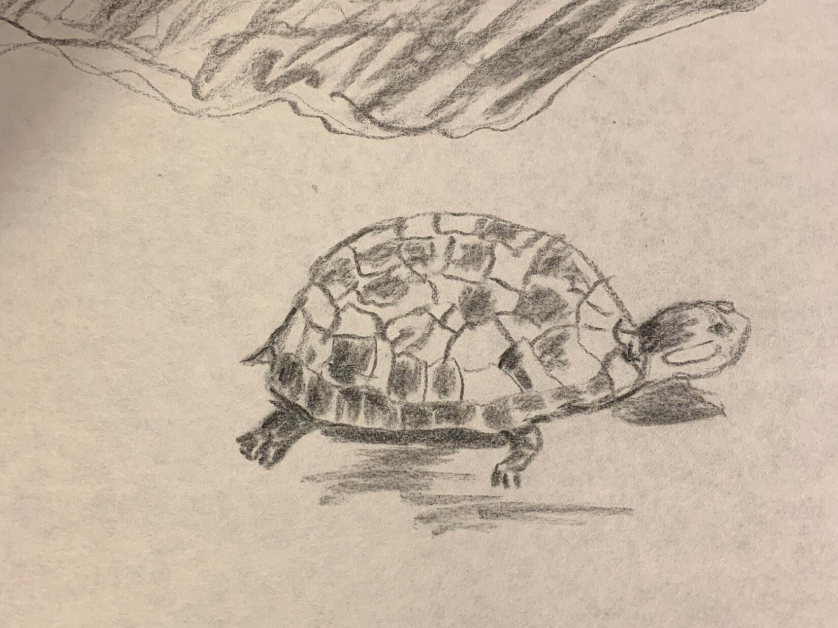 Charcoal rendering of a turle