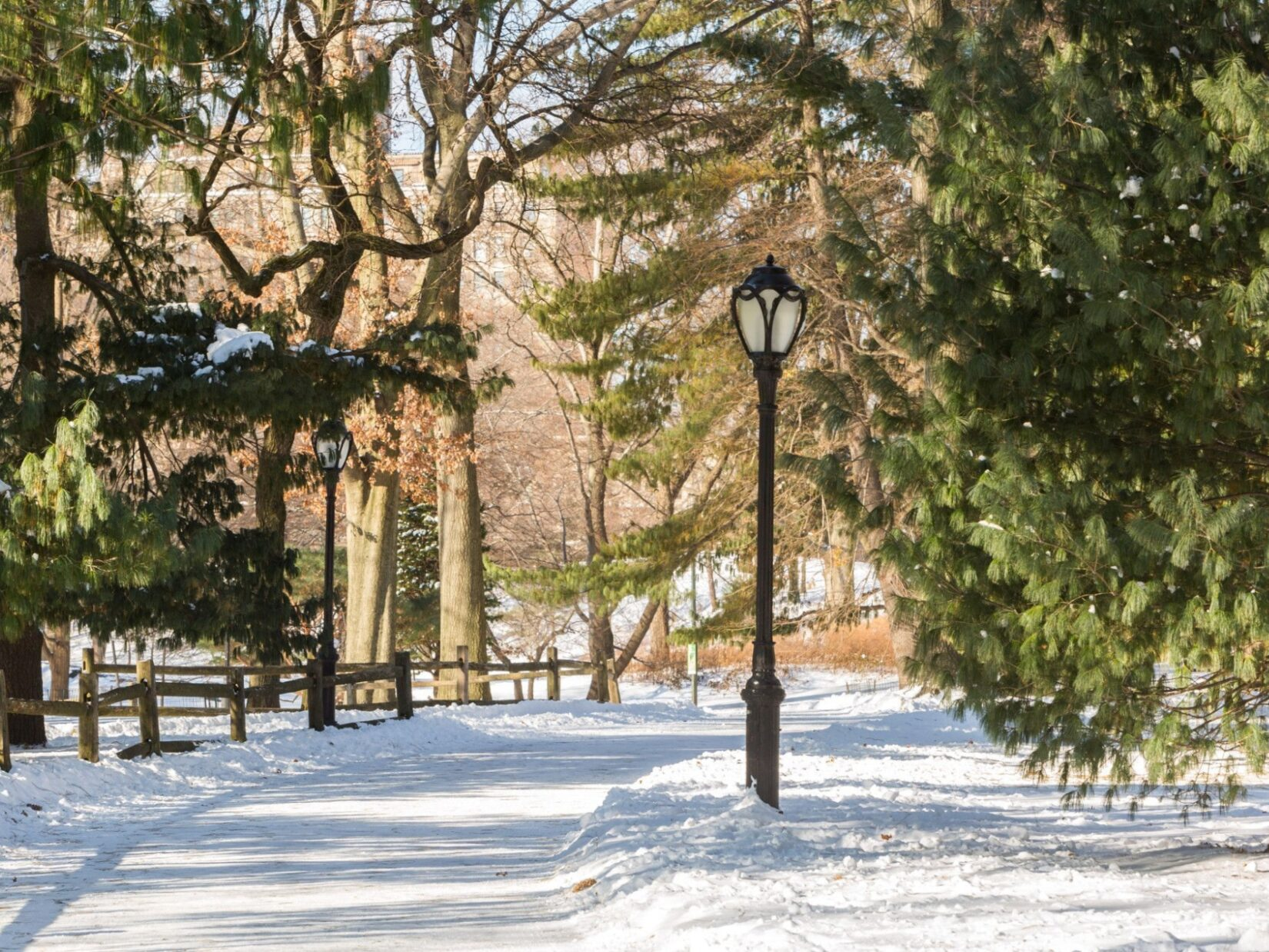 A path is cleared through a snow-blanketed landscape of pine trees