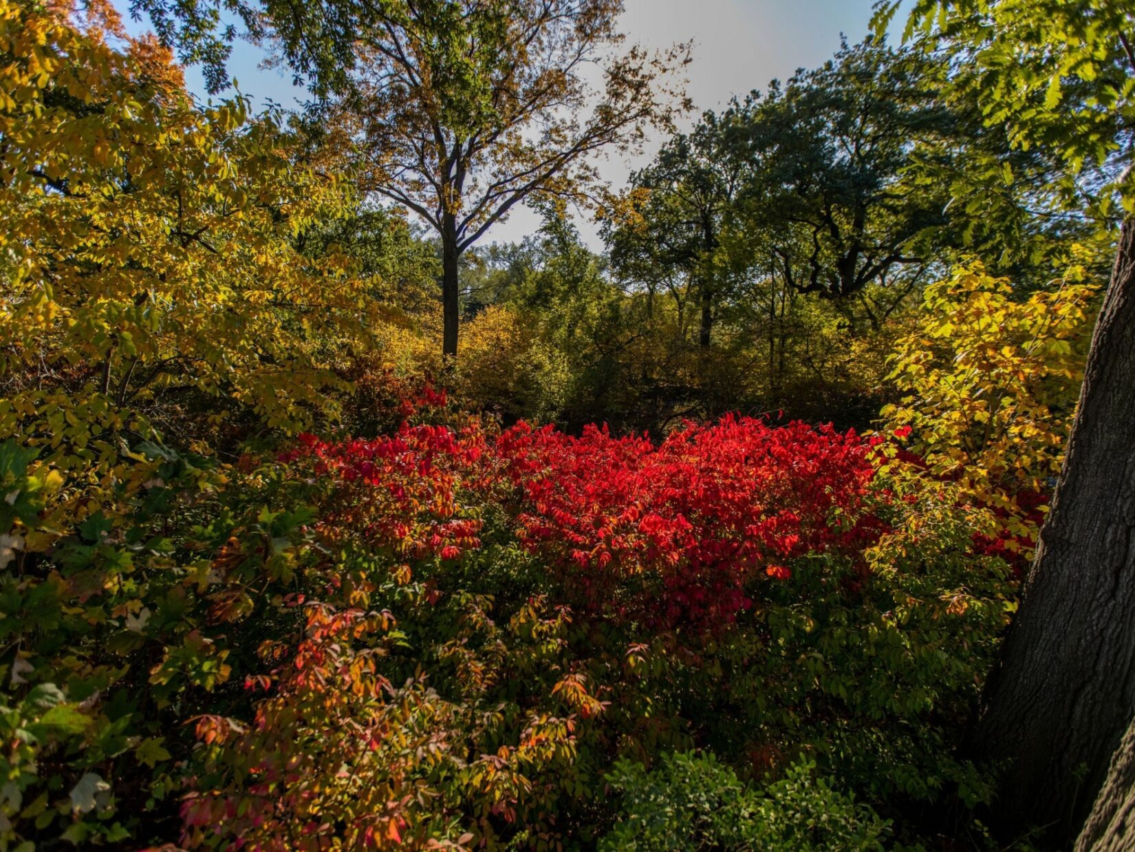 The foliage around the Reservoir displays stunning bursts of color.
