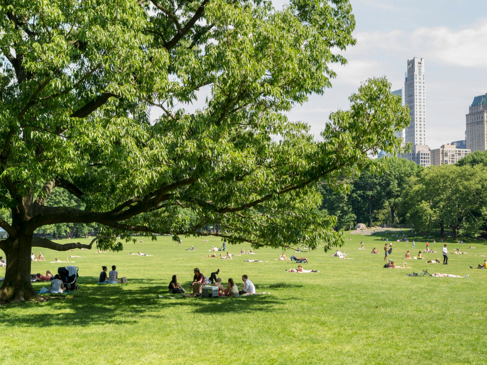 Picnickers under the shade of a tree in the Sheep Meadow on a beautiful summer day